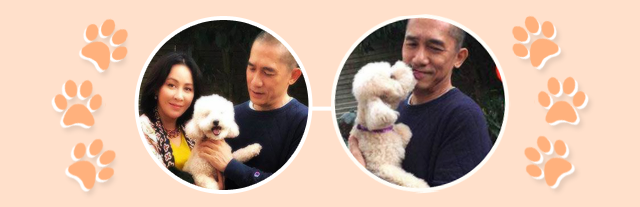tony leung carina lau national puppy day